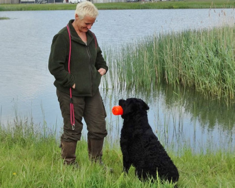 Workshops en begeleiding voor uw hond