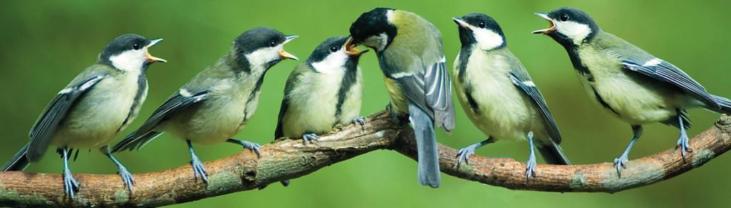 Assortiment diebo huisdierwereld for Vliegen in de tuin