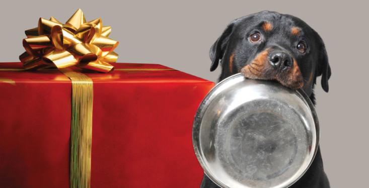 Zet de voerbak van je huisdier!