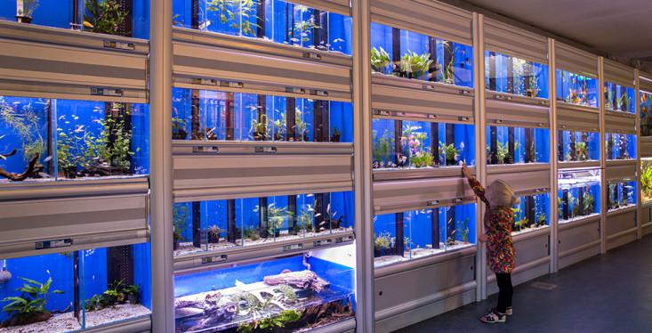 Prachtige aquariumhal
