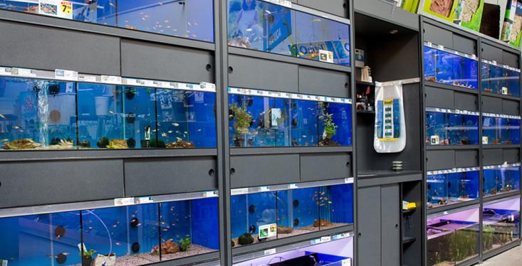 Voor de echte aquariumliefhebber