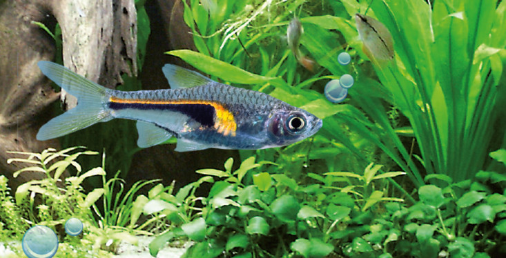 10 december: Aquariumdag