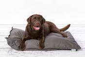 rebel-petz-relax-hondenkussen-grijs-met-hond.jpg