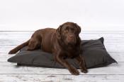 rebel-petz-relax-hondenkussen-zwart-met-hond.jpg