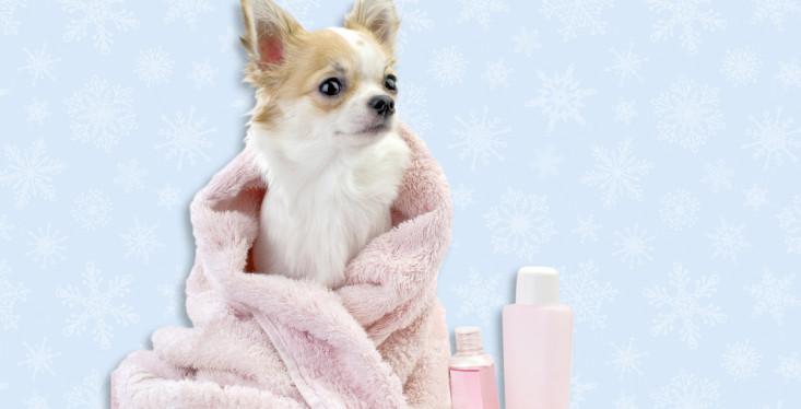 Beautydag voor de hond!