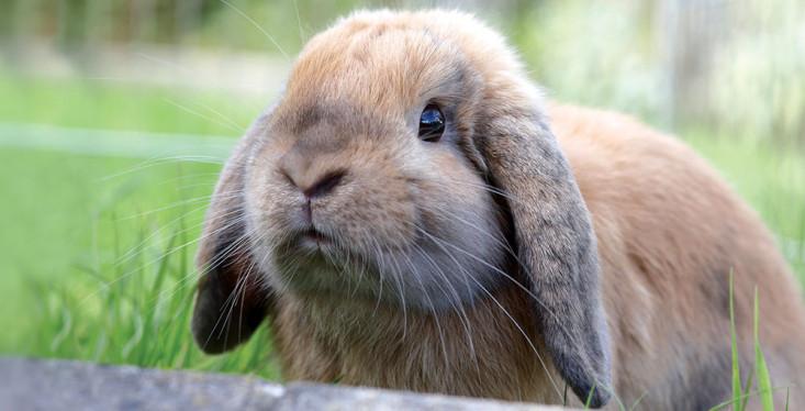 Uw konijn voordelig vaccineren