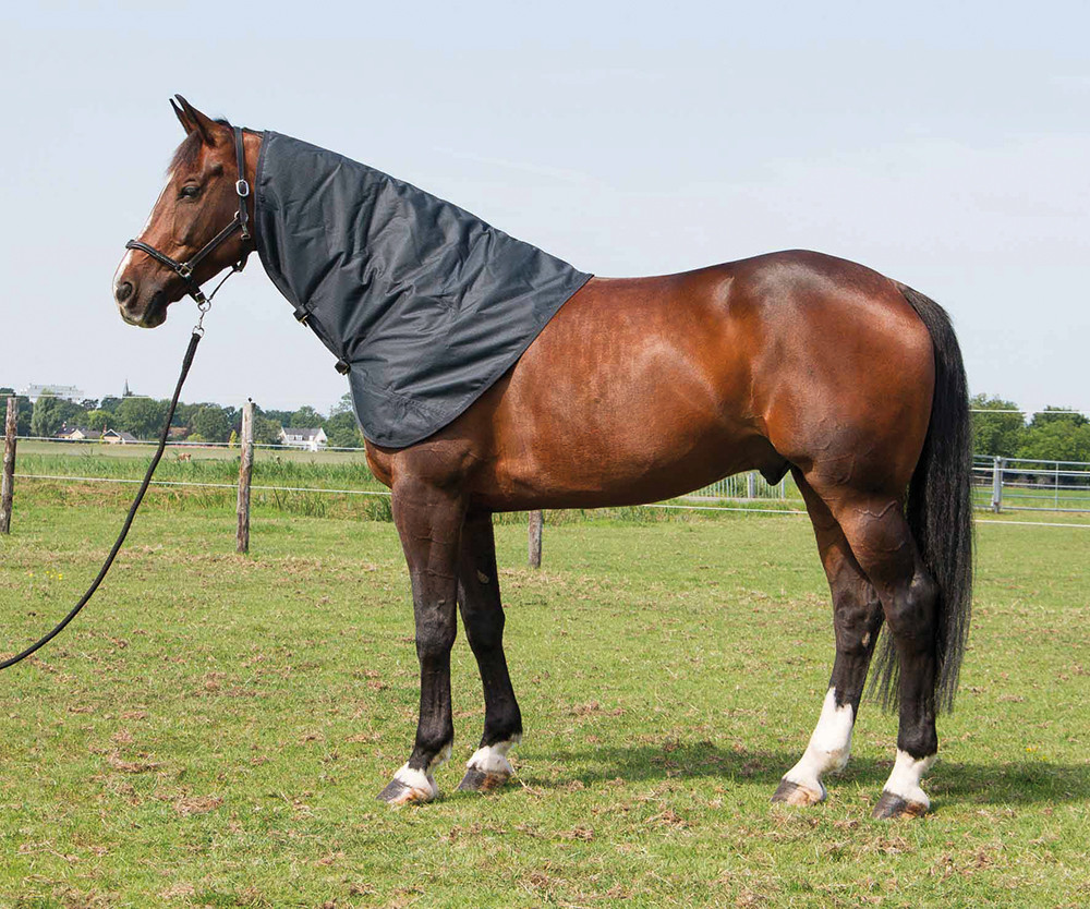 Harry's Horse Thor losse hals