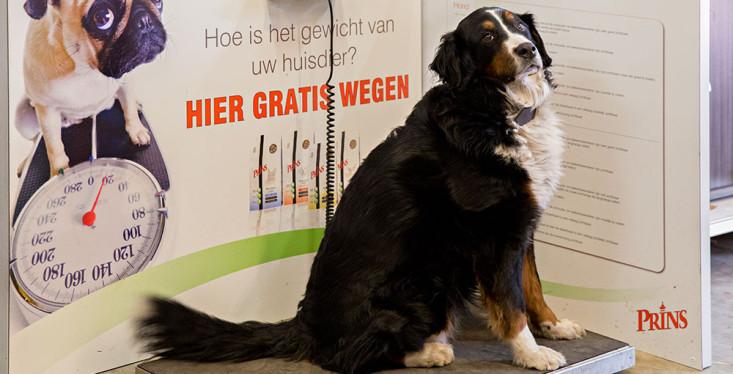 Uw hond of kat gratis wegen