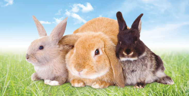 11 april: Workshop konijnen houden
