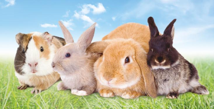 22 april: Konijnen- en knaagdierendag