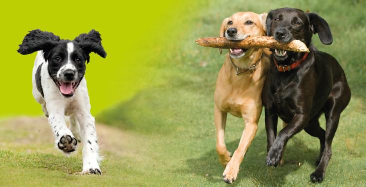 23 april: Hondenfeest!