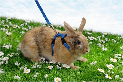 Beeztees konijnentuigje assorti