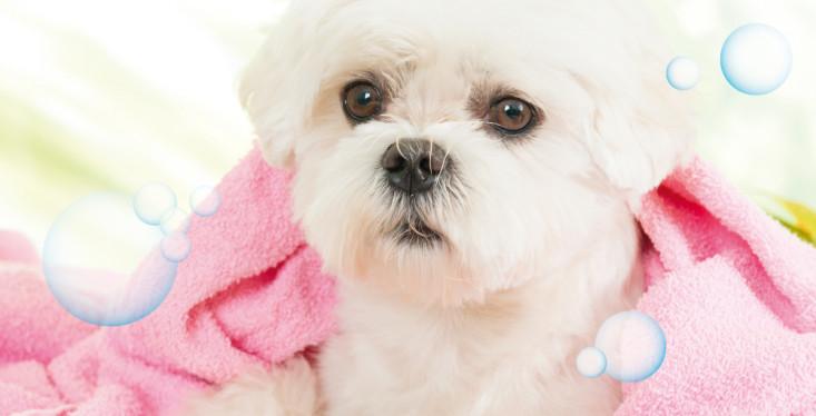13 mei: Beautydag voor de hond
