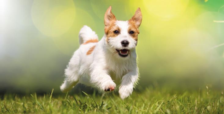 20 mei: Hondendag