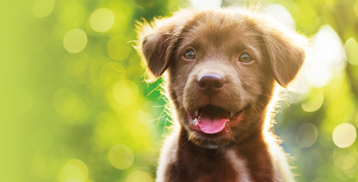 Hond in het zonnetje!
