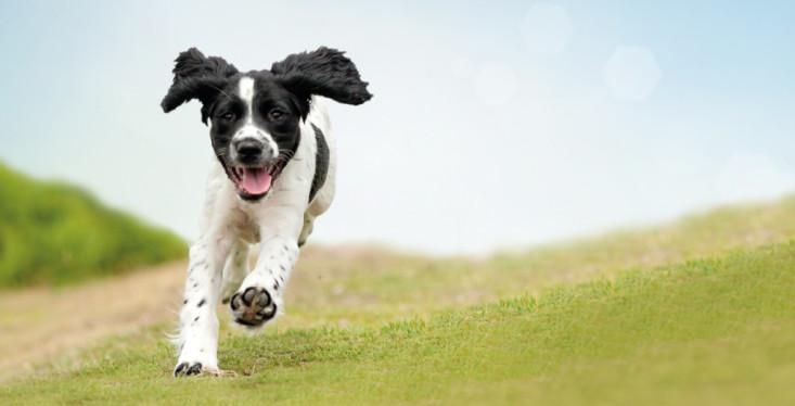 27 mei: Pets Walk hondenwandeling