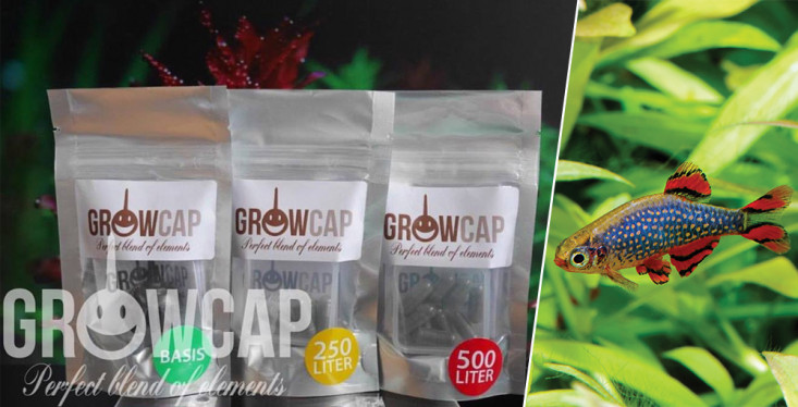 Nieuw: GrowCap