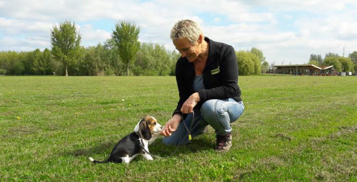 Workshops en begeleiding voor je hond