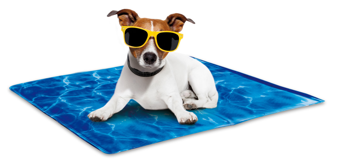All for Paws Chill Out-Always Cool Dog Mat M