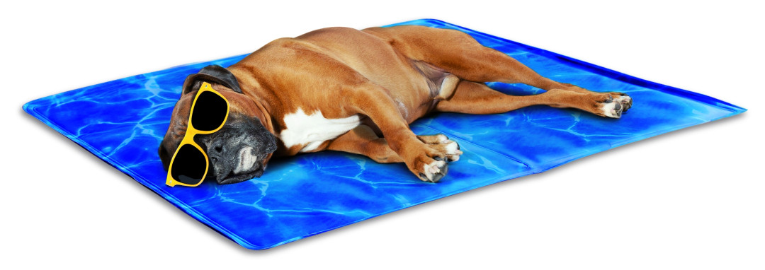 All for Paws Chill Out-Always Cool Dog Mat L
