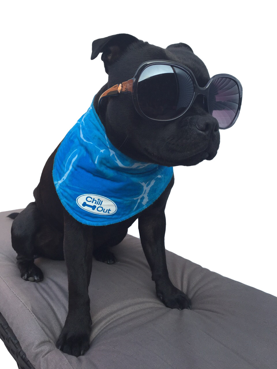 All for Paws Chill Out Bandana