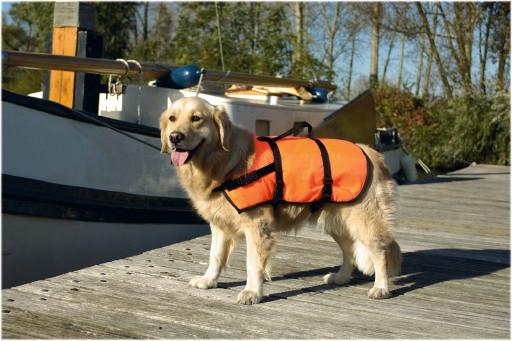 Beeztees veiligheids/zwemvest