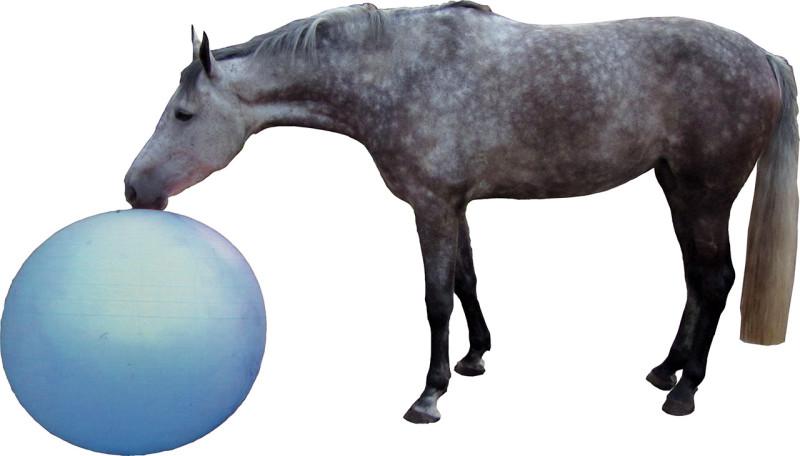 QHP paardenvoetbal blauw 100 cm