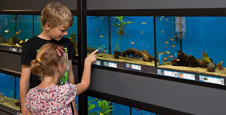 Alles voor uw aquarium