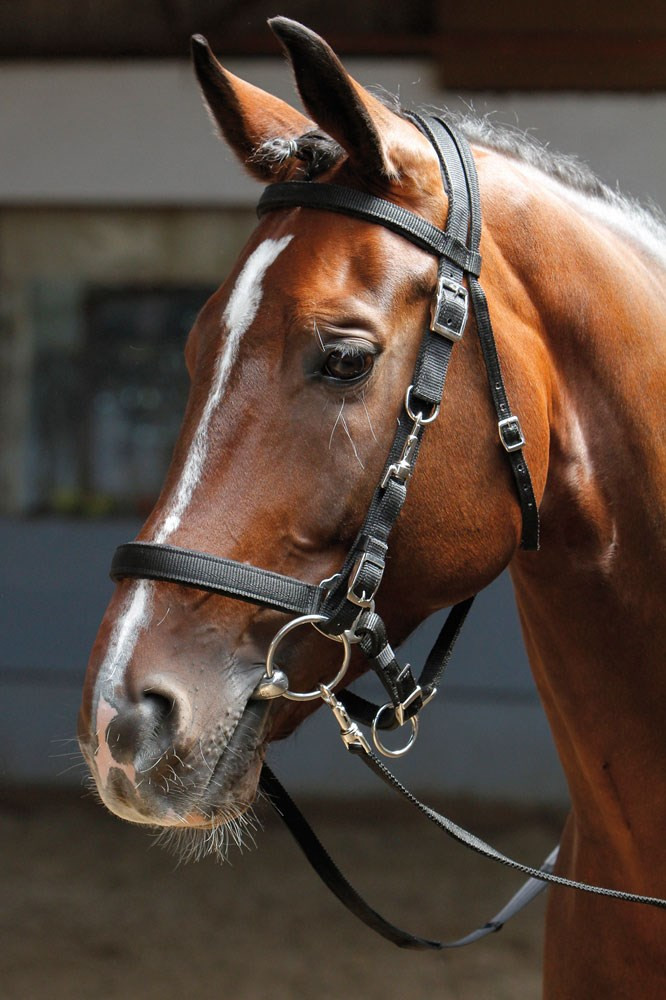 Harry's Horse hoofdstel/halster zwart