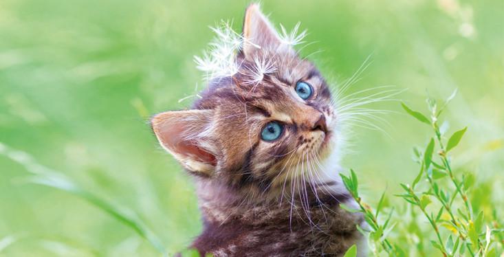 Handige tips bij een kitten in huis