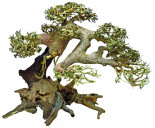 superfish-bonsai-driftwood-large.jpg