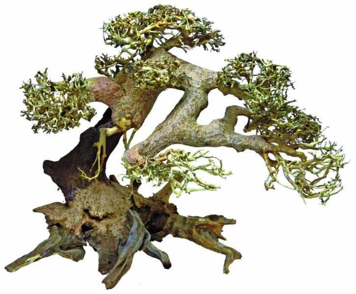 Bonsai Driftwood aquariumdecoratie Large
