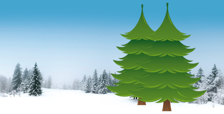 Kerstbomen te koop!