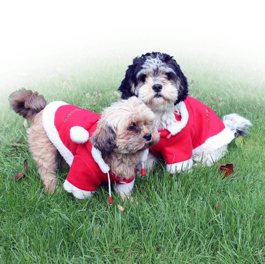 QHP kerstjas voor honden