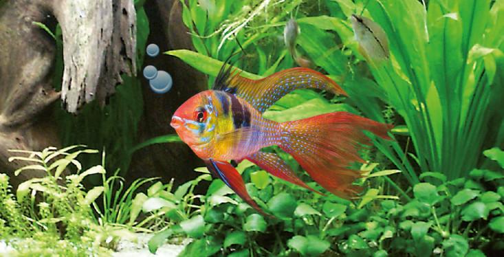 24 & 25 november: Aquariumdagen