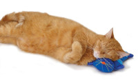 Petstages Kitty Cuddle Pal thumb