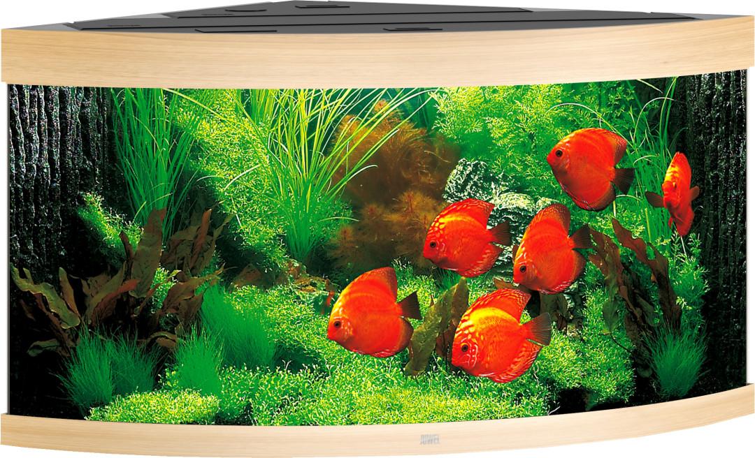 Juwel aquarium Trigon 350 LED licht eiken