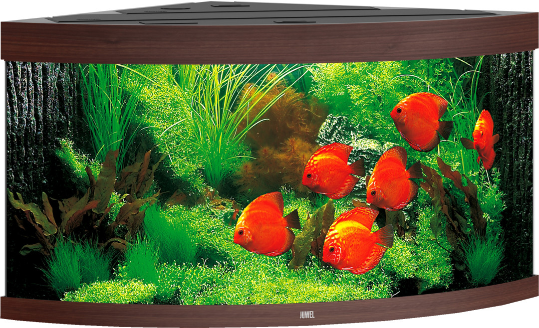 Juwel aquarium Trigon 350 LED donkerbruin