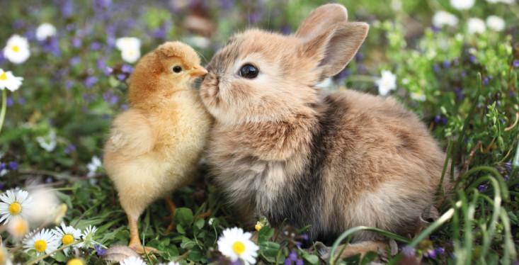 Kip & konijn: De leukste tuinvriendjes!