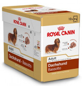 h-bhnw-doos_dachshund-adult.jpg