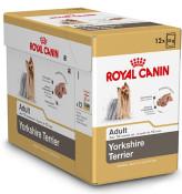 h-bhnw-doos_yorkshire-terrier-adult.jpg