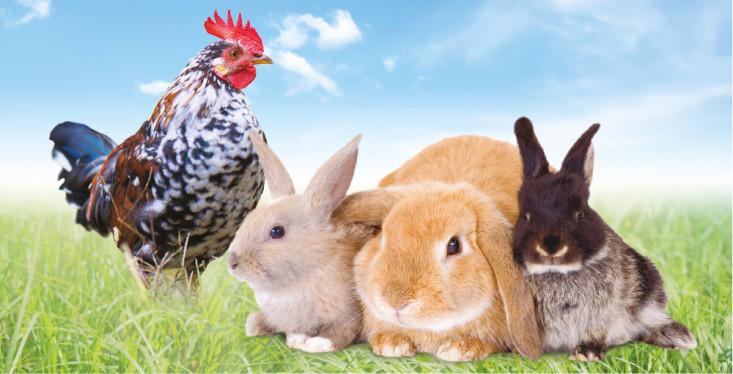 21 april: Kippen- en konijnendag