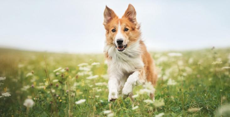 19 mei: Hondendag