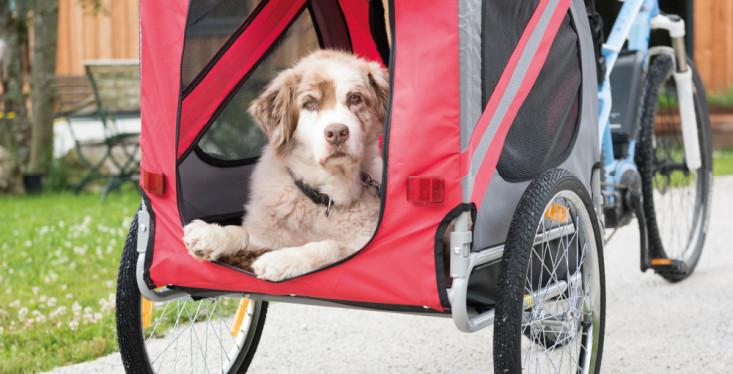 9 juni: Hondendag 'Eropuit met de hond'