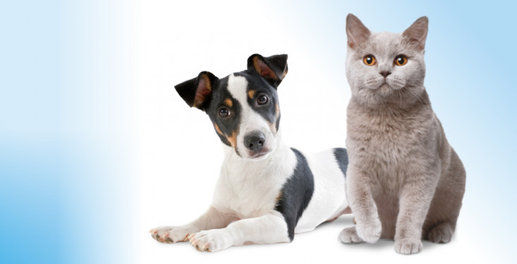 Castratie/sterilisatie van hond of kat