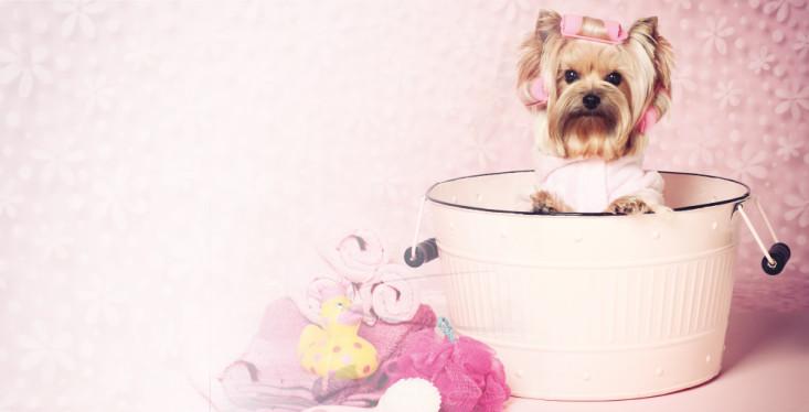 26 mei: Verwendag voor de hond