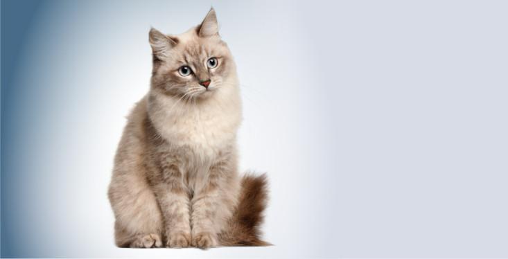 23 juni: Kattendag