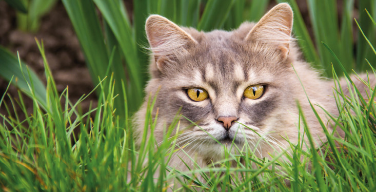 Heerlijk kattenleven