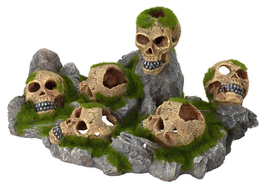 Aqua D'ella skulls world S