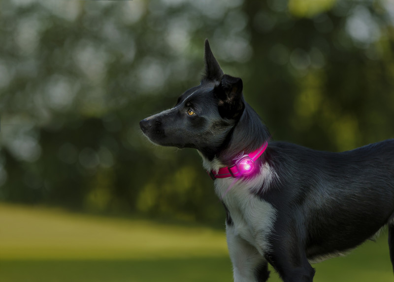 Orbiloc Safety Light Dog Dual roze